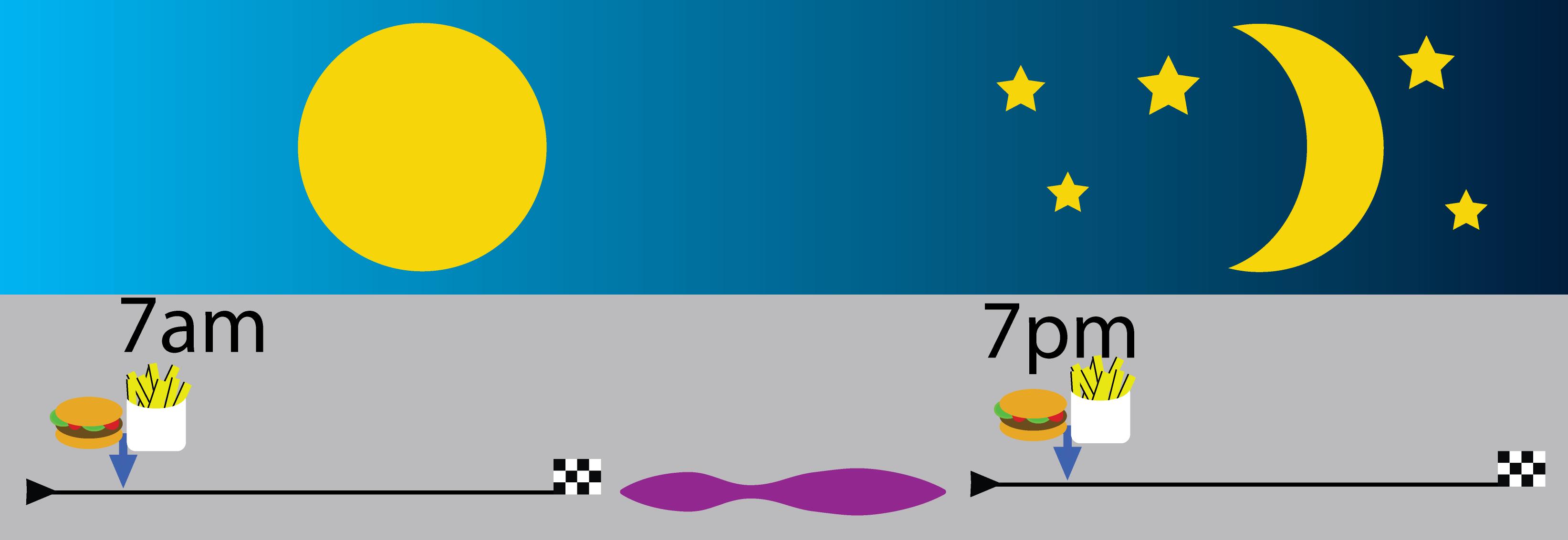 2A circadian